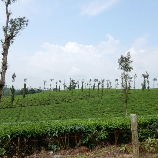 2---The-Glenlorna-Tea-Estate