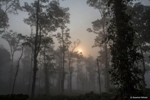 misty plantation 2