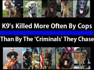 Police Kill More K9's Than Anyone Else