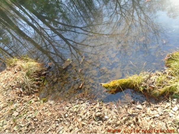 lacul cu frunze
