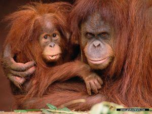 scimmie (11)