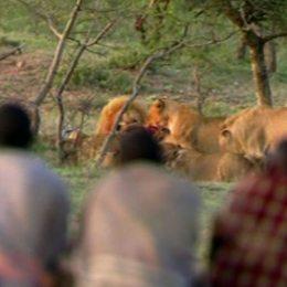 Così tre uomini affamati  rubano il cibo a 15 leoni