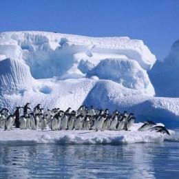 La crudele lotta per la vita  fra pinguini e foca leopardo