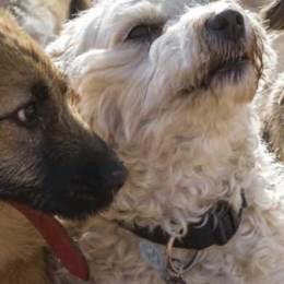 Lasciamo vivere i cani  Basta con gli orrori