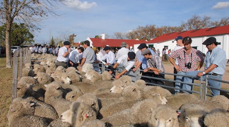Aguerre es optimista sobre vender carne ovina con hueso en América Central y Unión Europea