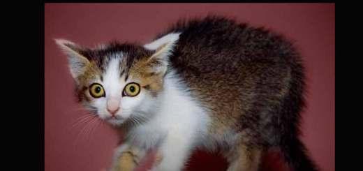 La fobia a los gatos se denomina ailurofobia | Foto: mikiyoshiuzuki.deviantart.com