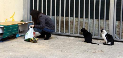 Cosas de Gatos dando de comer gatos callejeros