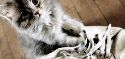 ¿Qué son las casas de acogida temporal de gatos? Conócelas | Foto: http://m0thart.deviantart.com