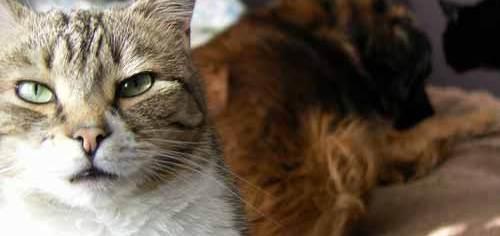 Gatos y perros tienen sistemas jerárquicos distintos, no pueden compararse | Foto: http://29blackstreet.blogspot.com.es/
