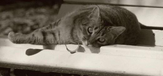 La colonia de gatos del Jardín Botánico de Valencia acoge a muchos gatos sin hogar | Foto: Gatos del Jardín Botánico