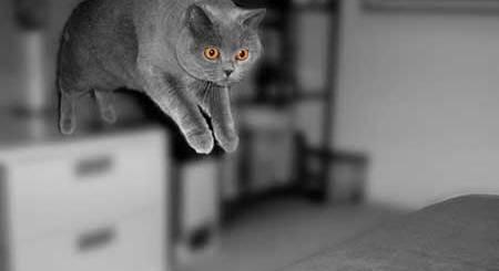 Por qué los gatos caen de pie | Foto: o0jessica0o.deviantart.com