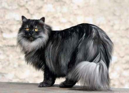 El pelo del gato cumple diversas funciones imprescindibles para el minino | Foto: midnightcookie.deviantart.com
