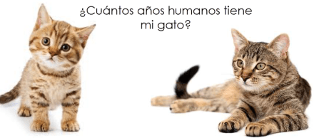 Equivalencia edad humana gato