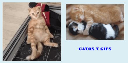 Gatos y gifs: dormir parte 1