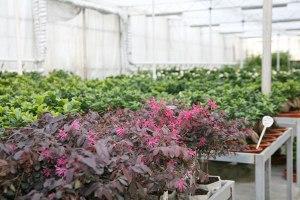 cosmosplants-plants4