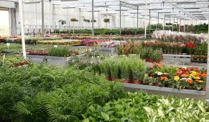 Τμήμα του εσωτερικού από τις εγκαταστάσεις της Cosmosplants στις Αχαρνές