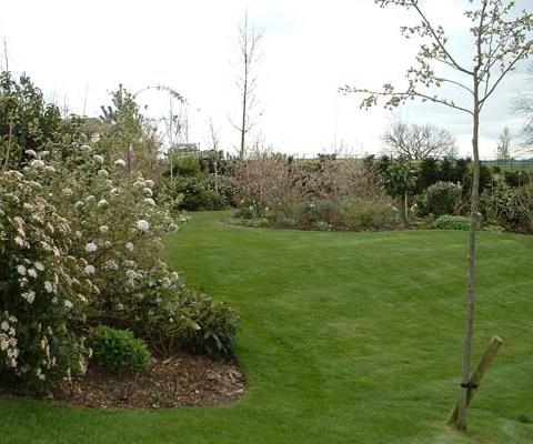 Woodland garden in Spring