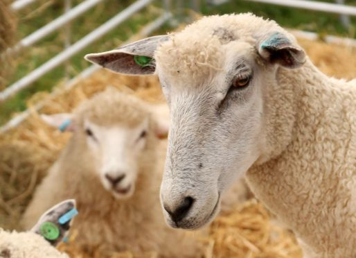 cotswold-show-2017-cotswolds-concierge (4)