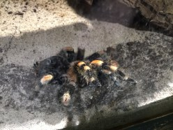 stratford-butterfly-farm-cotswolds-concierge-10