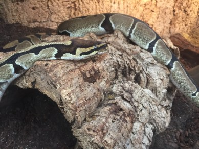 stratford-butterfly-farm-cotswolds-concierge-5