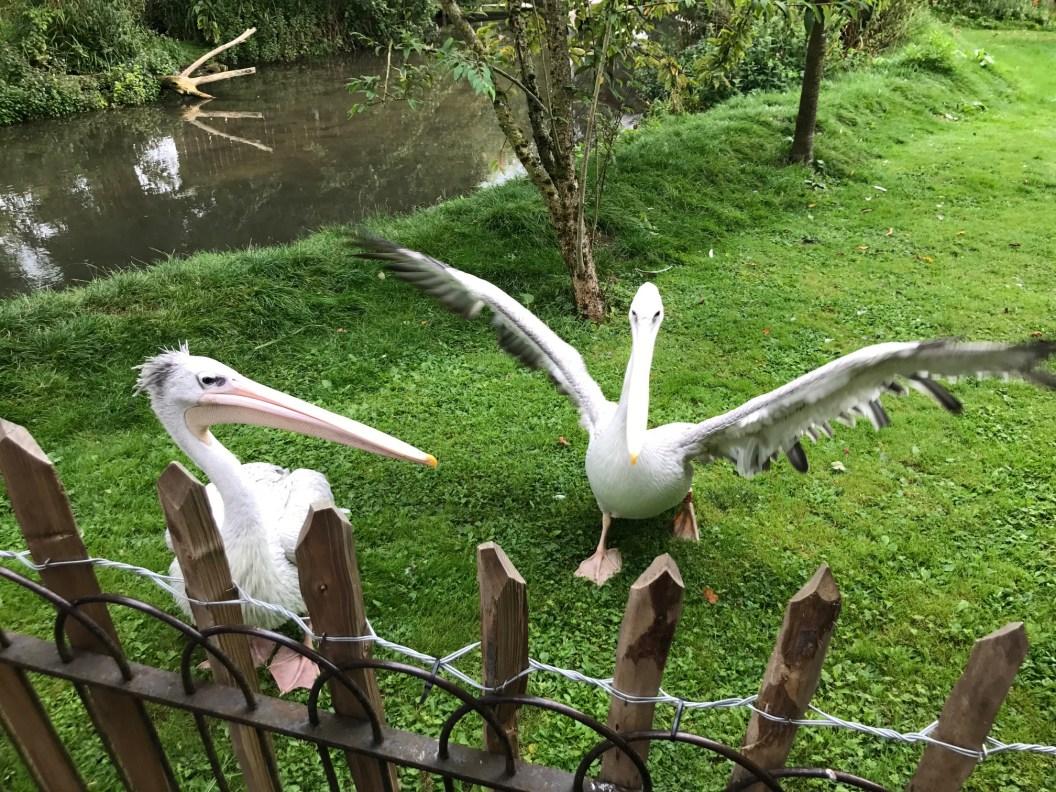 birdland-bourton-on-the-water-cotswolds-concierge (23)
