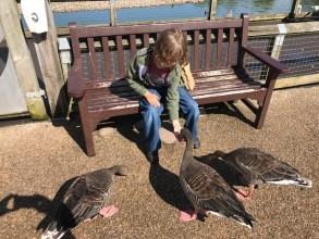 slimbridge-wetlands-centre-cotswolds-concierge (22)