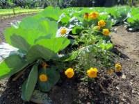 Viva la Producción! Urban Farming In Cuba