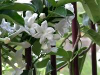 What If Jasmine Loses Its Fragrance?Could Poetry, Nay Life Itself, Ever Be The Same?