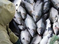 Photo Credit: international.fisheries.org