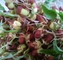adzuki bean sprouts