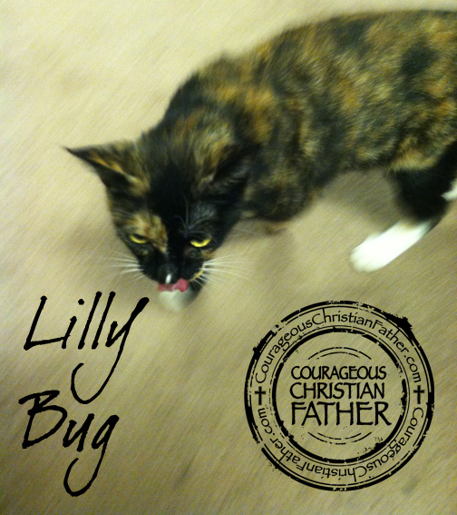 Lilly Bug