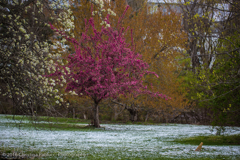 A cold and winter spring mix in my parent backyard Saturday April 9th, 2016. (Christina Paolucci, photographer)