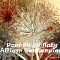 "Allium Dried Flower ""Fireworks"" Patriotic Centerpiece"
