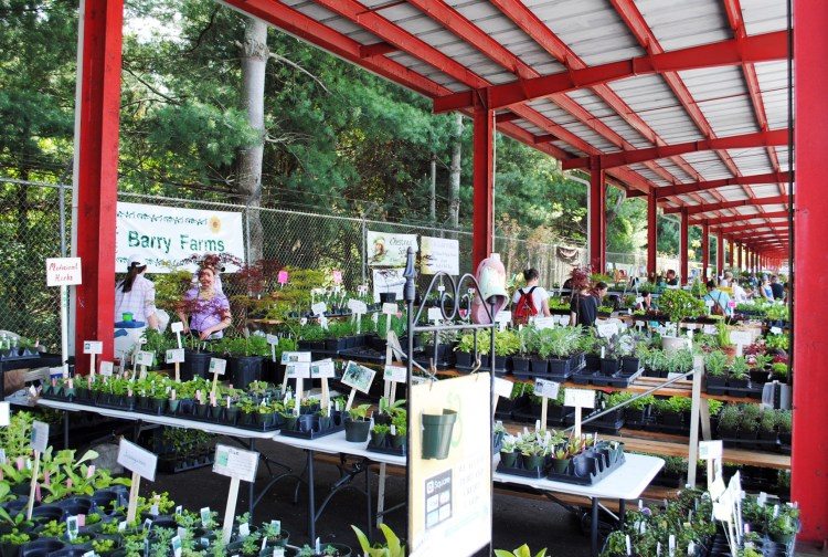 summer garden herb fest booths