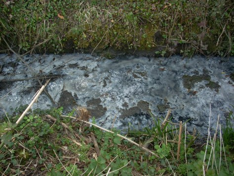 section of brook in Cranleigh with  raw sewage