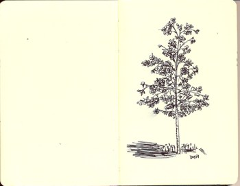 Line Drawing - Tree