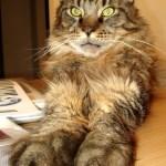 Mr Big Paws