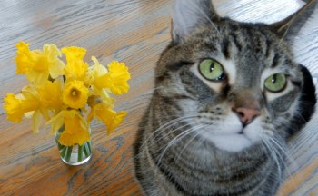 Dont Eat The Daffodils