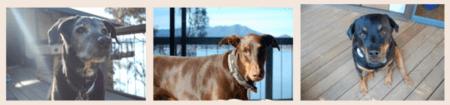 Dog-Ma Dogs