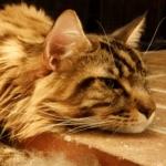 magellan-napping-thumbnail