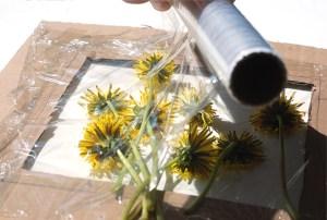 tablou din flori naturale presate - pasul 3