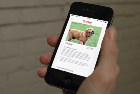 Dogs Up For Adoption Being Matched On Tinder 3