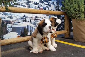 MophieRescue Dogs SXSW