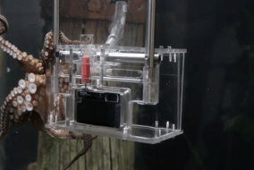 "Sony's ""Octographer"" turns an octopus into a photographer!"