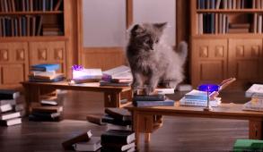 "Whiskas Opens ""Kitten Kollege"""