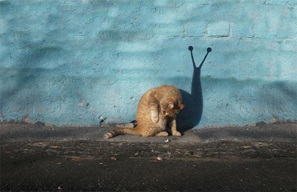 Cat-Snail-Photography-by-Alexey-Menschikov