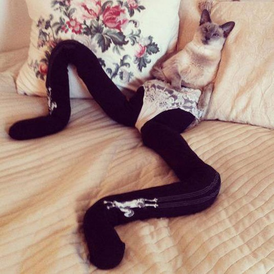 Cats_in_tights__2725490k