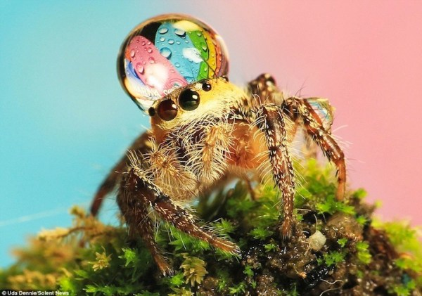 spiderswaterdrops07
