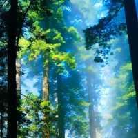 Raccogliere l'Energia degli alberi
