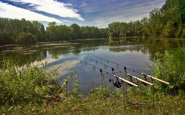 View over the rods down a weedy lake from my swim